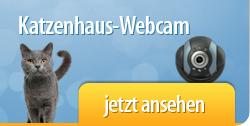 Katzenhaus-Webcam