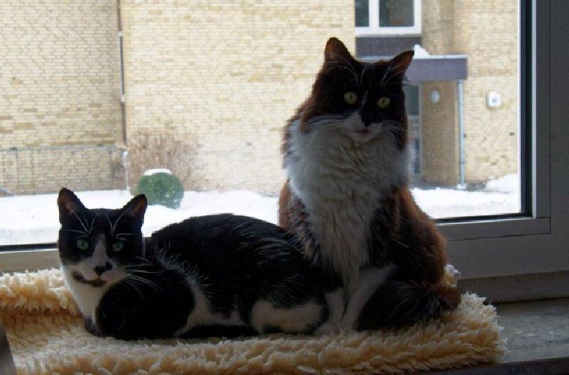 Felino & Lorena