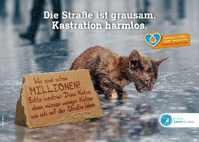 Kampagne_Katzenkastration